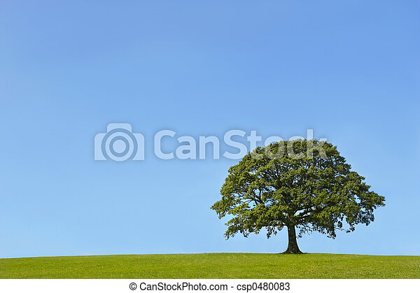 The Ancient Oak in Summer - csp0480083