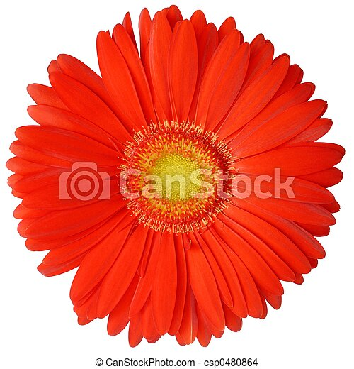 Flower - csp0480864