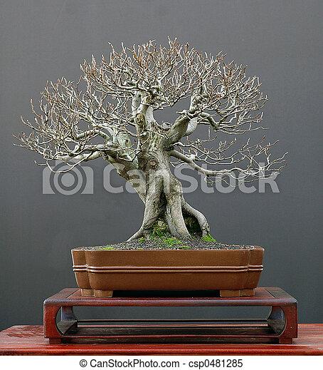 Stock im genes de haya bonsai invierno europeo - Bonsai de haya ...
