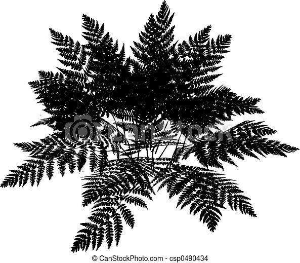 Fern silhouette - csp0490434