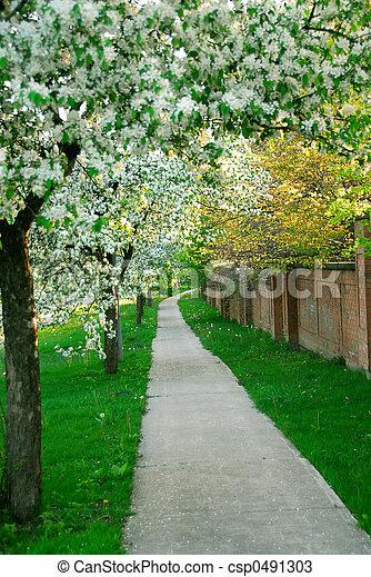 Apple orchard - csp0491303