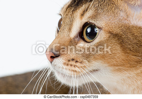 The kitten on a white background with interest looks... - csp0497359