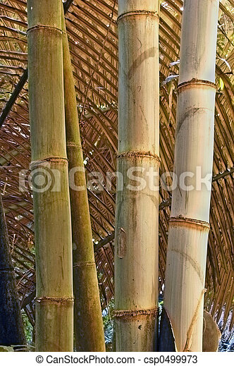 Brown bamboo - csp0499973