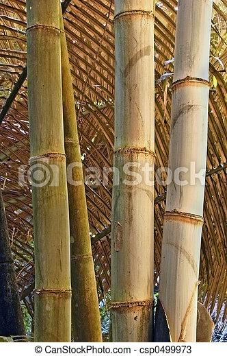 Brown bamboo - csp0499973