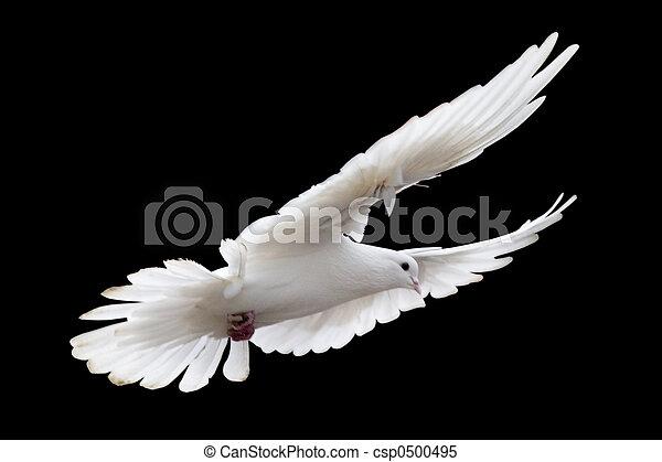 white pigeon - csp0500495