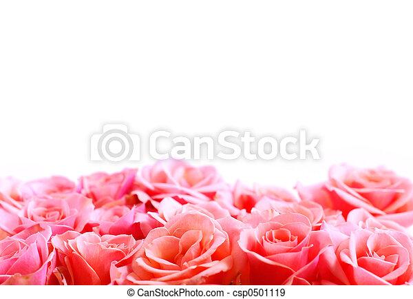 Flower border - csp0501119