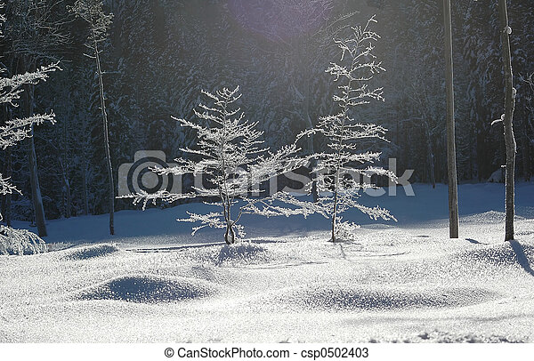 barren trees in freeze #2 - csp0502403