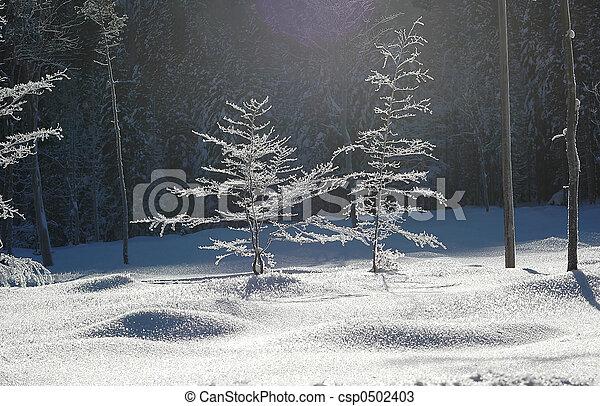 barren trees in freeze #2 - csp0502403