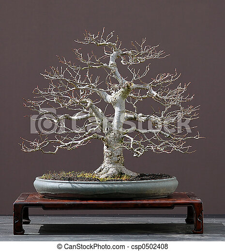bilder von linde baum bonsai linde baum lime tree. Black Bedroom Furniture Sets. Home Design Ideas