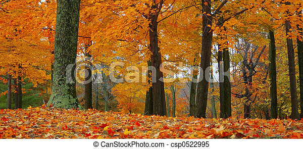 otoño, bosque - csp0522995