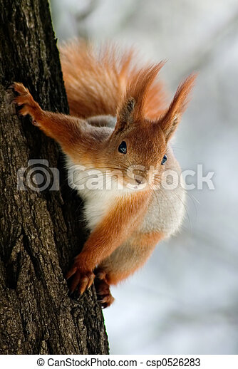 Squirrel on the tree stem