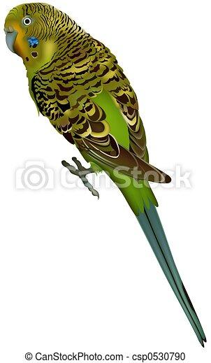 Stock de ilustration de periquito melopsittacus undulatus csp0530790 buscar clipart - Dessin perruche ...