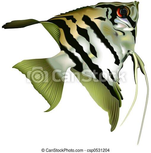 Angelfish Stock Illustration Images. 598 Angelfish illustrations ...