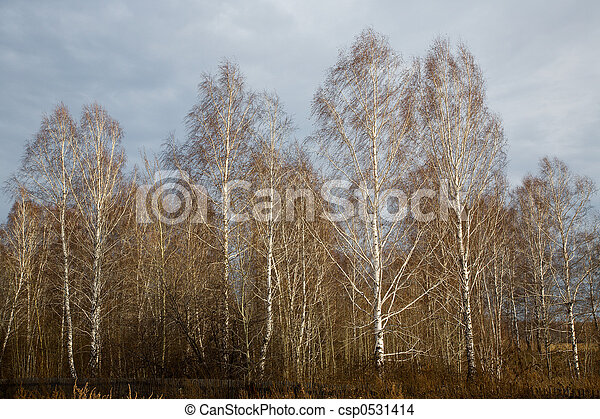 Rural landscape. - csp0531414