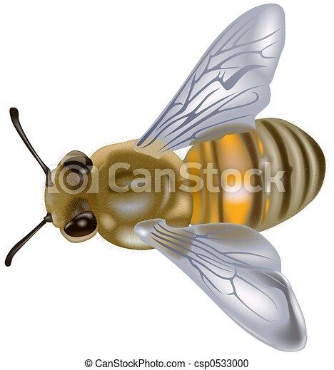 Honeybee - csp0533000