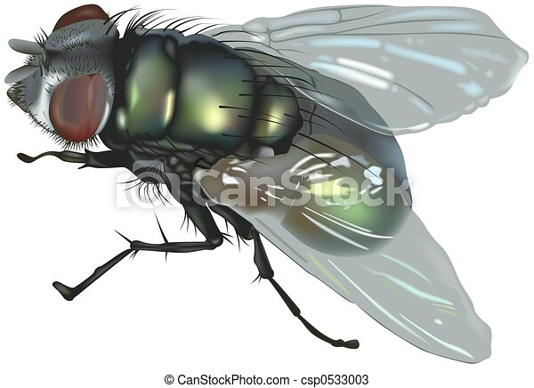 Blow fly - csp0533003