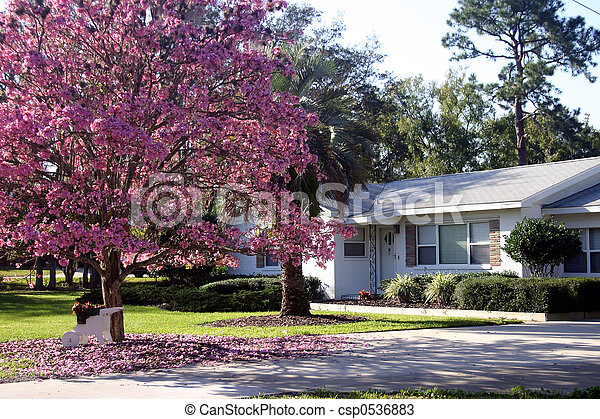 photos de maison fleur arbre n devant de a blanc csp0536883 recherchez des. Black Bedroom Furniture Sets. Home Design Ideas