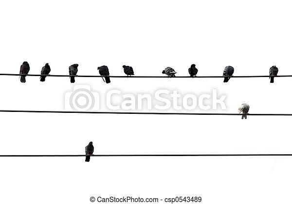 drót, madarak - csp0543489