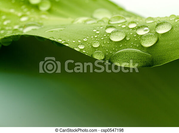 Leaf - csp0547198