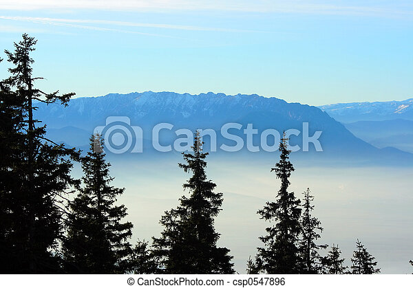 Fir trees over a foggy valley - csp0547896