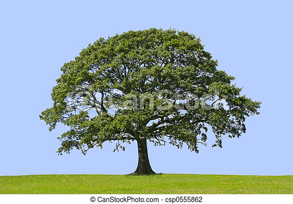Oak Tree, Symbol of Strength - csp0555862