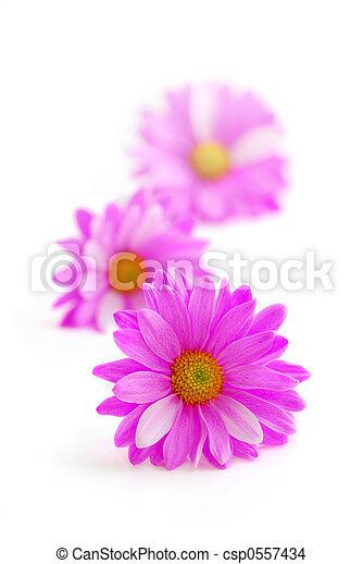 Pink flowers - csp0557434