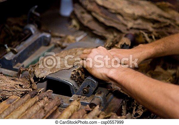 tobacco worker - csp0557999