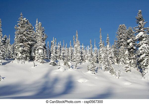 Winter Landscape - csp0567300