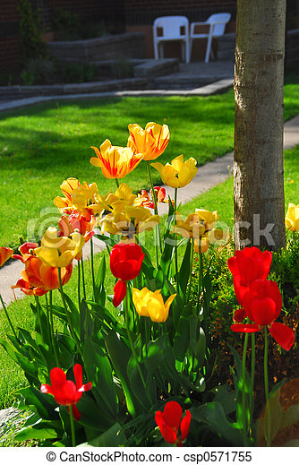 Tulips at a house - csp0571755