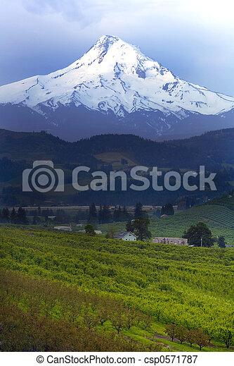 Mt Hood - csp0571787