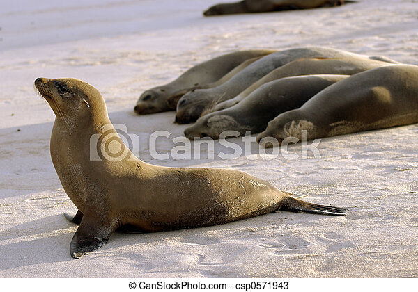 Seals in Formation - csp0571943