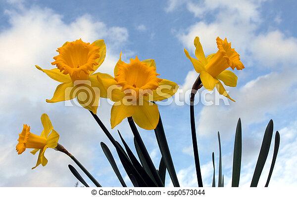 primavera, flores - csp0573044