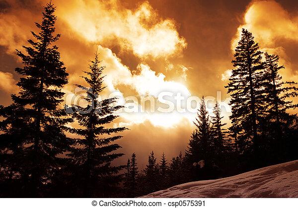 Vivid Pines - csp0575391