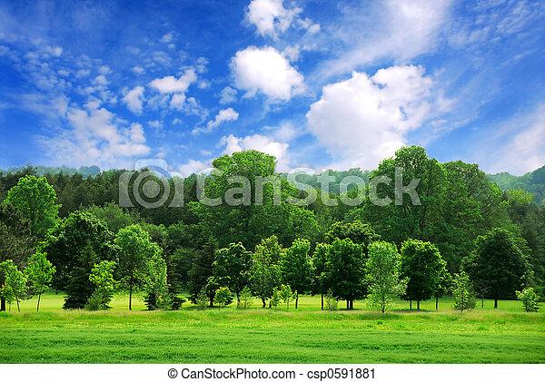 verde, bosque - csp0591881