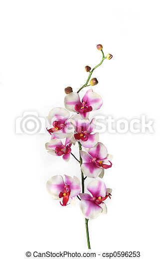 Single Stem of Orchid Flower