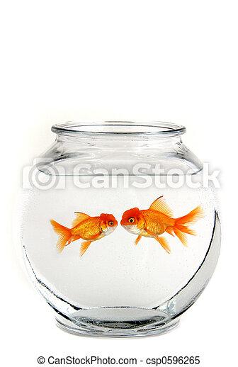 Two Kissing Goldfish - csp0596265