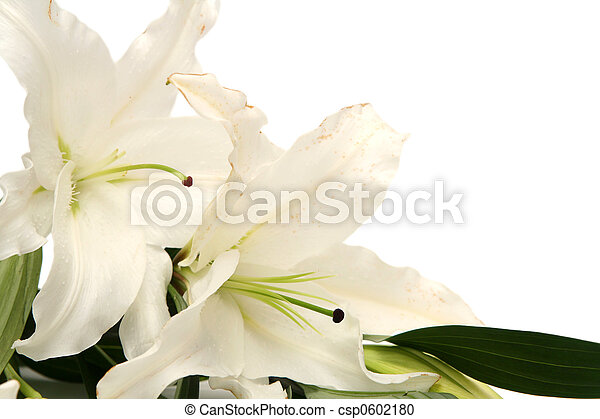 Easter lilies - csp0602180