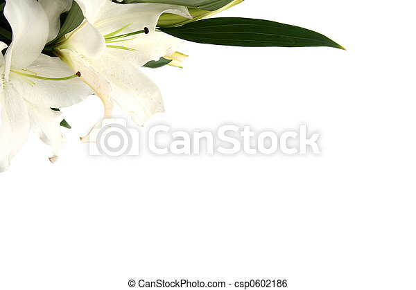 Easter lilies - csp0602186