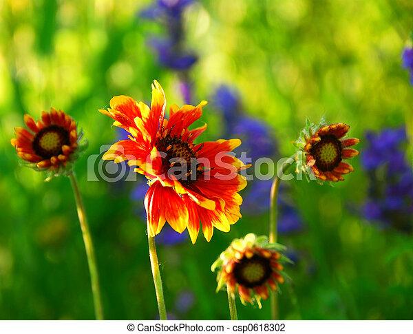 Wildflowers - csp0618302