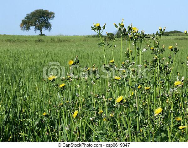 Rural landscape - csp0619347