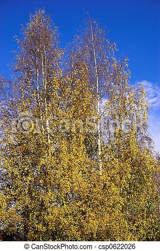 Autumn Colours - csp0622026
