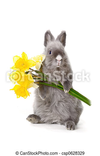 Bunny with yellow flowers   - csp0628329
