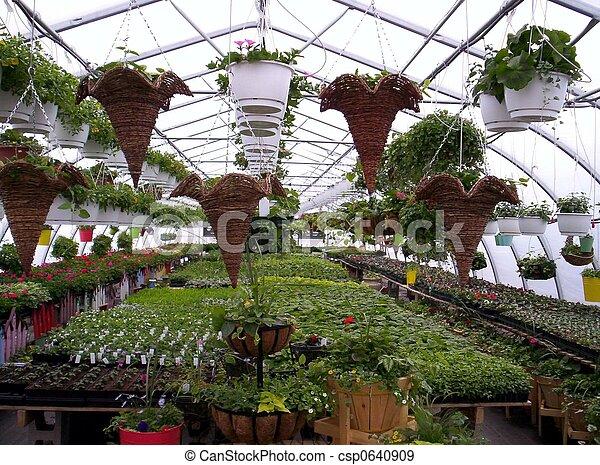 Stock de fotografos de plantas flores invernadero for Plantas para invernadero