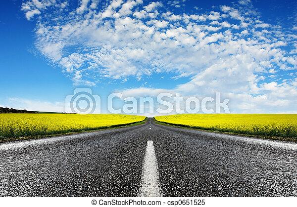 Canola, camino - csp0651525