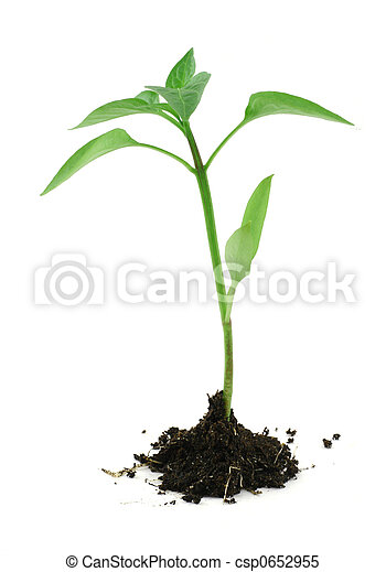 newborn plant with soil on white #2 - csp0652955