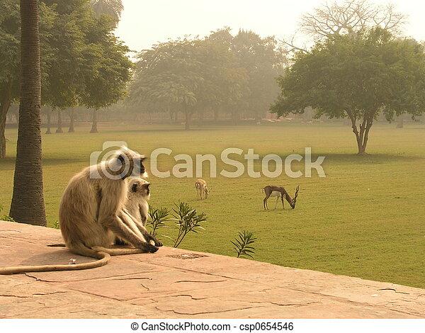 Exotic Animals - csp0654546