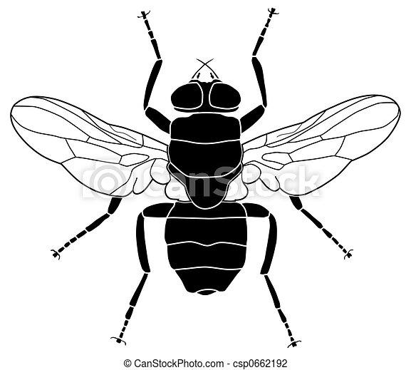 Clip art de mouche illustration de a commun mouche - Dessin de mouche ...