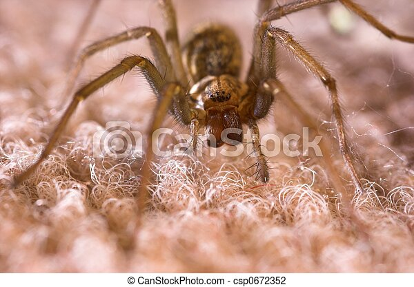 Facing Down a Spider - csp0672352