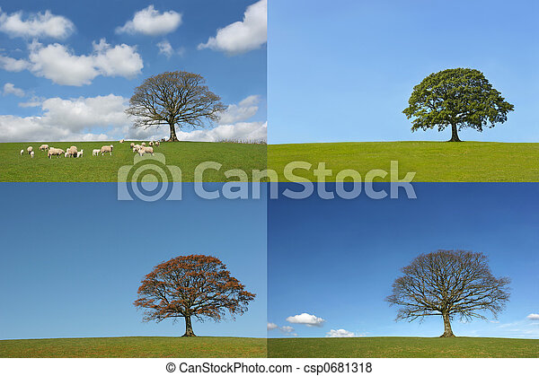 The Four Seasons of the Oak Tree - csp0681318