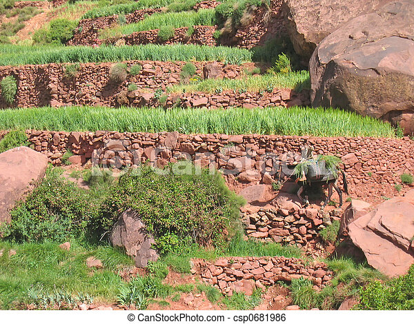 Terrace culture with a moroccan farmer and its donkey, Setti Fadma Atlas, Ourika valley, Morocco - csp0681986